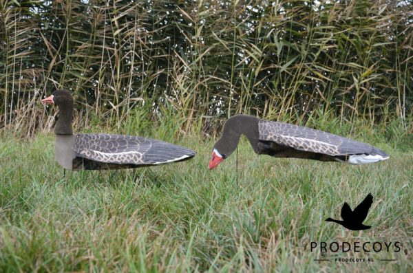 sillosocks greylag goose