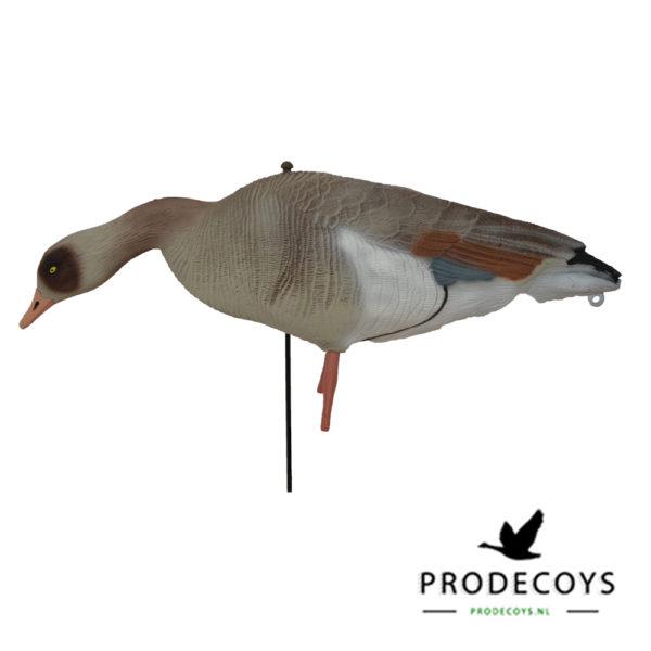 Egyptian goose decoys full body