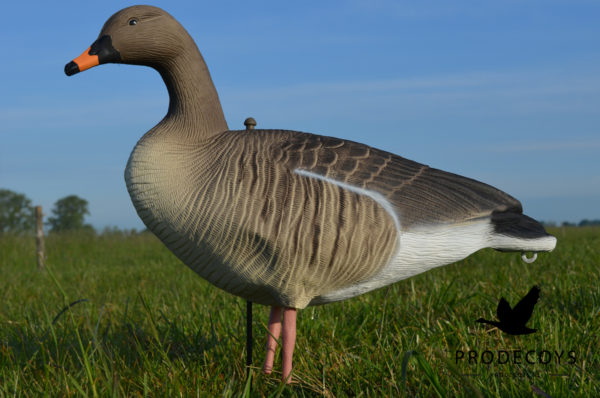 bean goose pink footed goose decoys full body